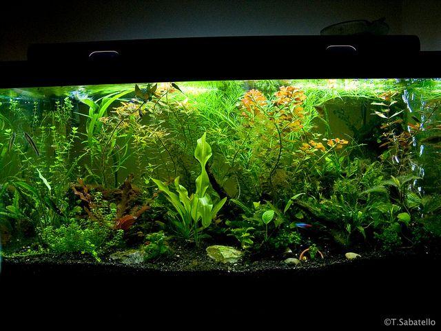 50 Gallon Planted Aquarium | Flickr - Photo Sharing!