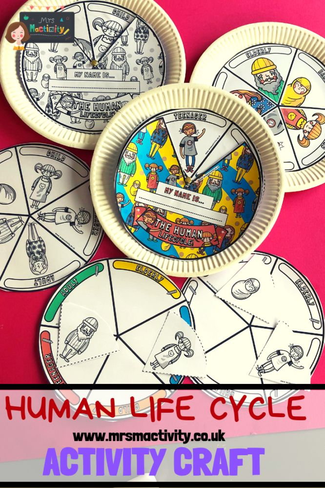 Human Life Cycle Activity Craft | Human life cycle, Life ...