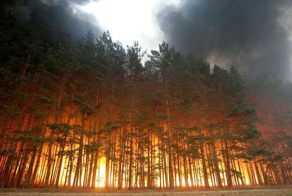 Incendiu in padure