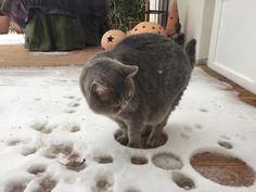 Cat hates snow.