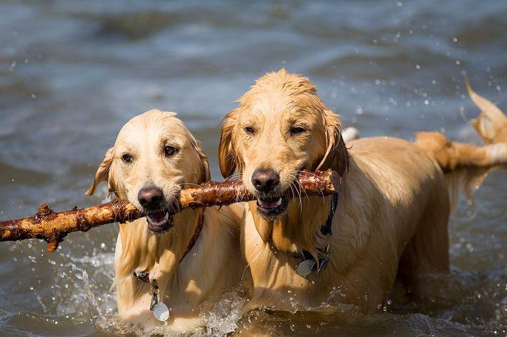 Kutya a vízben - mire figyeljünk? ...hogy számukra is legyen élmény az úszás! :)  #kutya #dog  #hírek   #nyaralás   #vízpart #water  #strand   #nyár   #summer #kutyabaráthelyek
