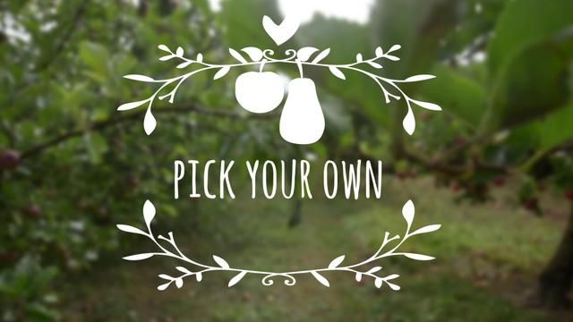 """When we planned this weeks pick-your-own adventure and our daughter asked what kind of apples there would be and then answered her own question with """"oh I know, we can check the stickers on them!"""" we knew this trip to an orchard was long overdue!"""