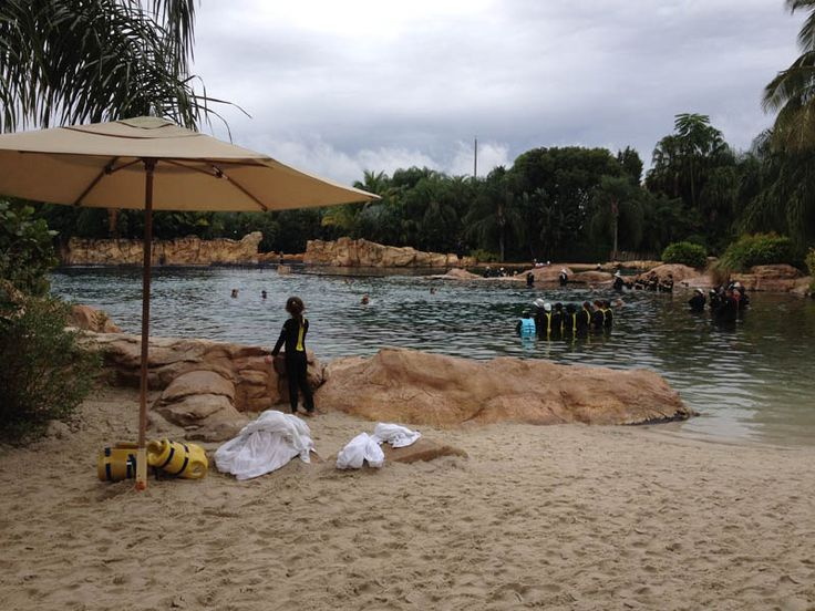 Review of what you can expect at Discovery Cove, in Orlando, Florida, with tips for what to bring, where to go, and what to do.