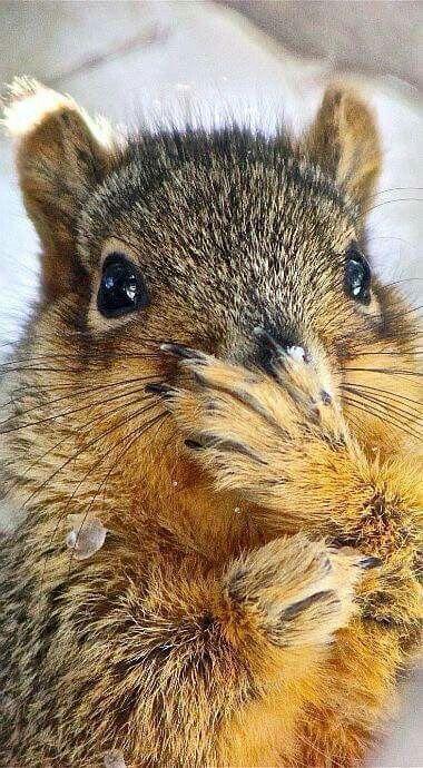 Squirrel In Ninja Pose