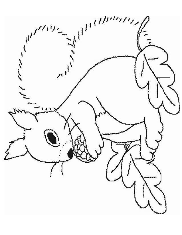 Les 25 meilleures id es de la cat gorie coloriage cureuil - Chat facile et gratuit ...