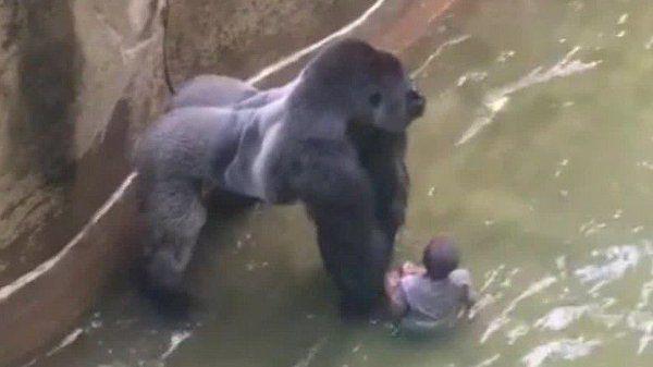 Le immagini dell'accaduto diventano virali e la polemica scoppia nei social sulla decisione presa e sul fatto che esistano ancora gli zoo.