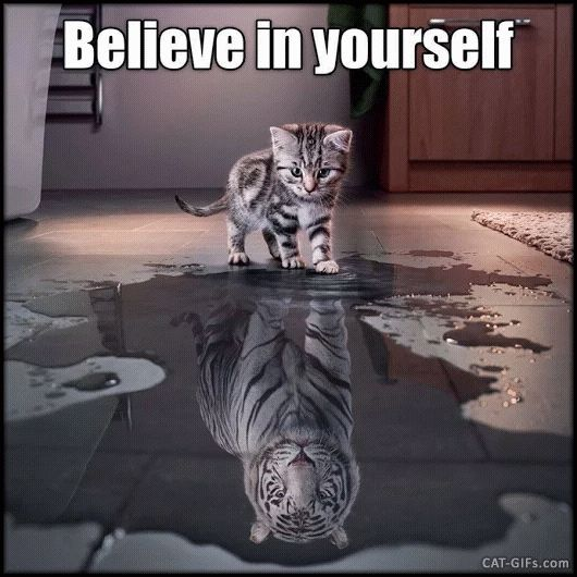 Artistic CAT GIF • When a Bengal Kitty wants to become a white Tiger. Believe in yourself