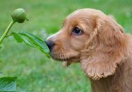 Selecting a breeder and what to look for when you go.
