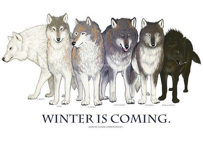 Which one is your favorite direwolf? {From left to right : Ghost (Jon) - Lady (Sansa) - Summer (Bran) - Grey Wind (Robb) - Nymeria (Arya) - Shaggydog (Rickon)} by got_insider