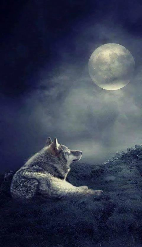 """Good Night!   (no words - """"Wolf and full moon."""")"""
