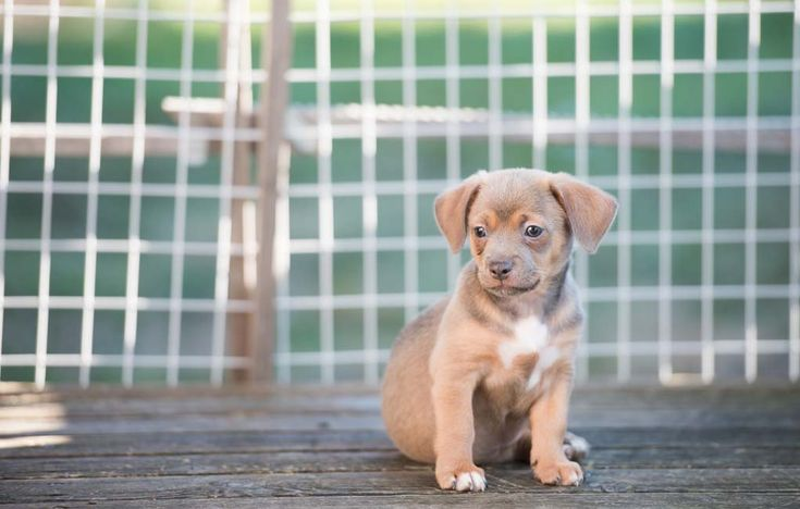 Outdoor dog kennels are great. They give your dog the chance to get some fresh air while also providing a space where your Fido can come back and relax in when he's done playing. It allows us as owners to not worry about our dogs while they're having free time. #dogkennels #dogs #crates #dogcrates #cleaning