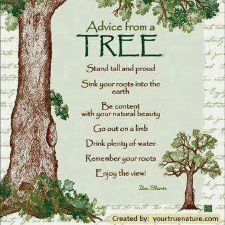 69 best Trees Quotes, Art & Words images on Pinterest ...