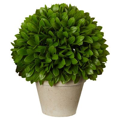 Found it at Wayfair - Kinsley Ball Plant