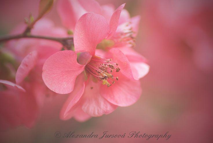 www.flickr.com/jursova