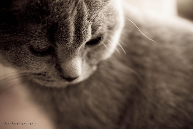 Photografy called Melancholic mood by Stanka