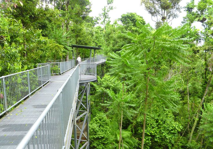 Rainforest Canopy Walkway Tourism