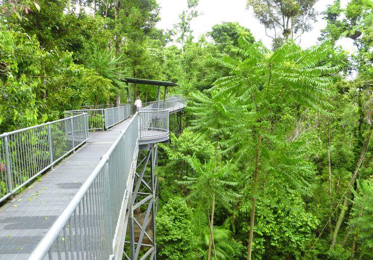 Rainforest Canopy Walkway Tourism