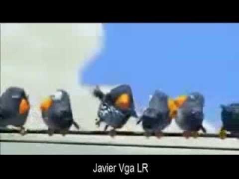 VIDEO CHISTOSO PARA whatsapp _ javier vga LR - YouTube