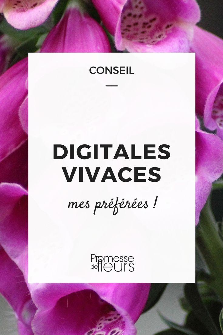 """Tous les jardiniers connaissent les digitales (Digitalis purpurea), parfois appelées """"Gants de Notre-Dame"""" du fait de la forme de leurs fleurs. Elles lancent delongues hampes vers le ciel, tant chargées..."""