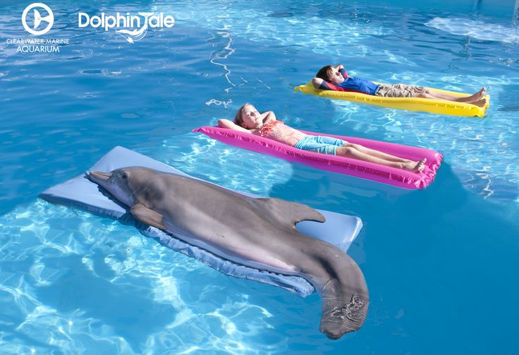 """Life could be a dream!""- Dolphin Tale. Who is excited for Dolphin Tale 2 to premiere?!?"