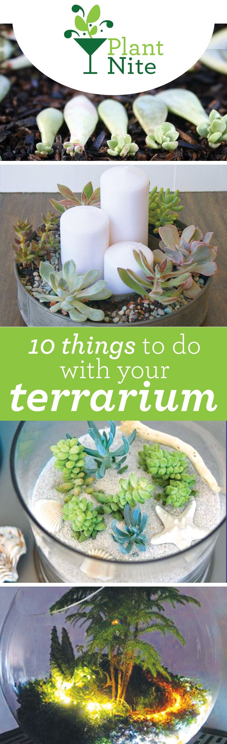 A lot of people aren't sure what to do with all the terrariums they bring home from Plant Nite. Here are 10 creative ideas for making your succulents stand out. Find a Plant Nite near you at PlantNite.com.