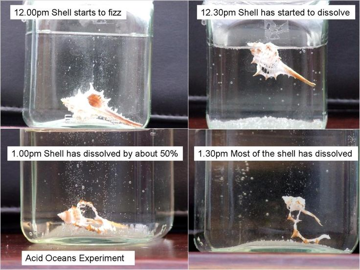75 best science fair projects images on pinterest science acidic ocean experiment sciox Images