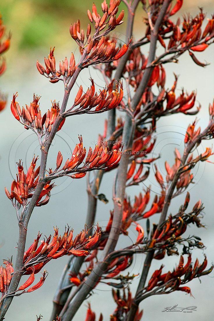 19 Best Ideas About Flax Flower On Pinterest Blue Skies