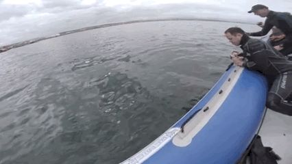 """In a post on its Facebook page, the video channel said: """"A Great White Shark attacked our boat last week in S.A. - a tough inflatable zodiac! One of the pontoons popped and it started to sink.""""   Just A Great White Shark Eating An Inflatable Boat"""