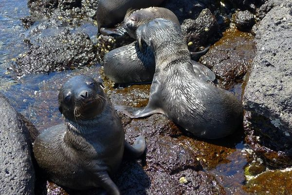 Sea Lions posing | An Action-Packed Guide to the Galapagos Islands | FATHOM Travel Blog and Travel Guides