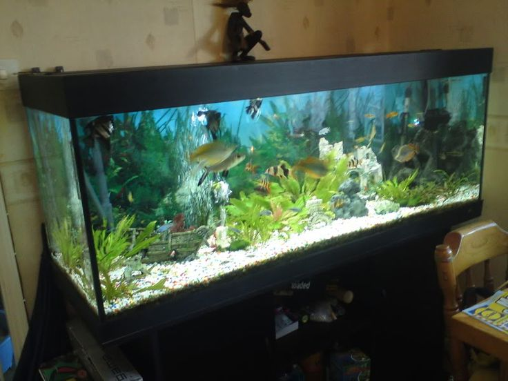 juwel rio 400 aquarium stand 5 ft complete fish tank. Black Bedroom Furniture Sets. Home Design Ideas