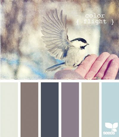Seeds | Color Flight | Color Palette
