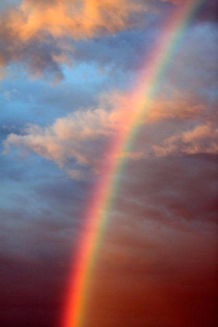 Rainbow in my backyard