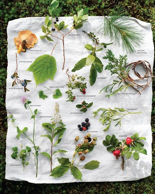 Foraging for Food -wild edibles - Good list of field guides for plant/foragables ID.