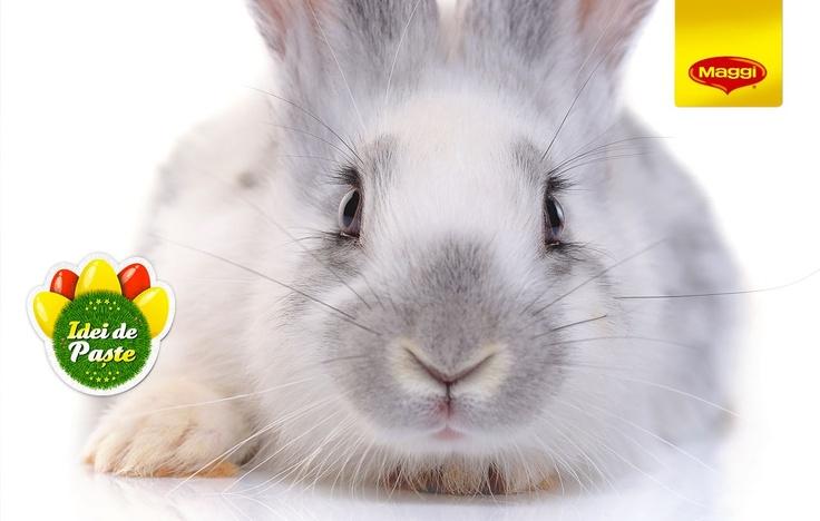 The magic of the Easter bunny // Magia iepurasului de Paste -> https://www.facebook.com/MAGGI.Romania