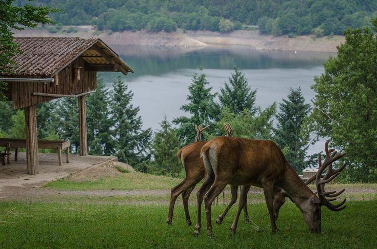 Wildpark Edersee