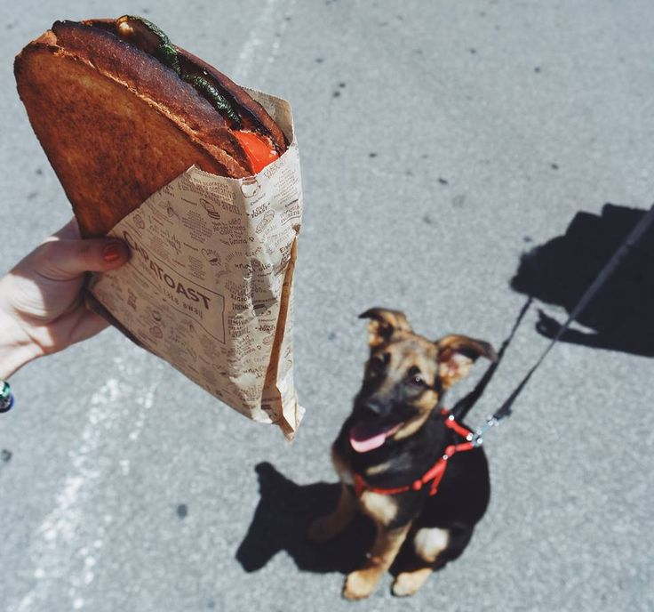E quando ti guarda così.. come fai a non fargli assaggiare un pezzo del tuo #Toast?! #capatoast #footd #streetfood #italianfood #pets #dog