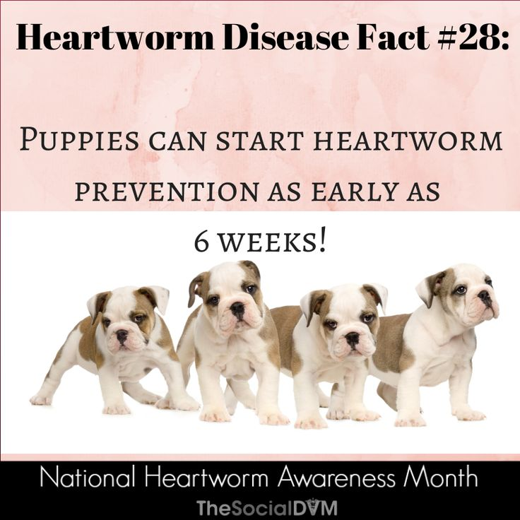 17 Best Images About Heartworm On Pinterest Cats For border=