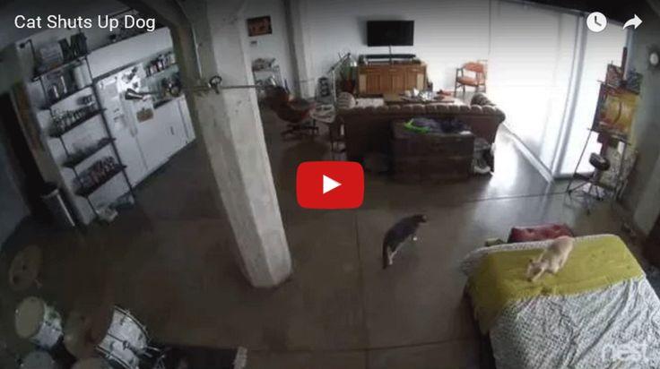 Gato ensina cachorro a parar de latir de forma memorável - O Mundo Do Cachorro