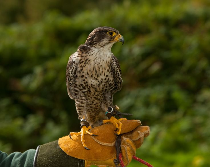 Enjoy a falconry display during your stay at Powerscourt Hotel Resort & Spa.