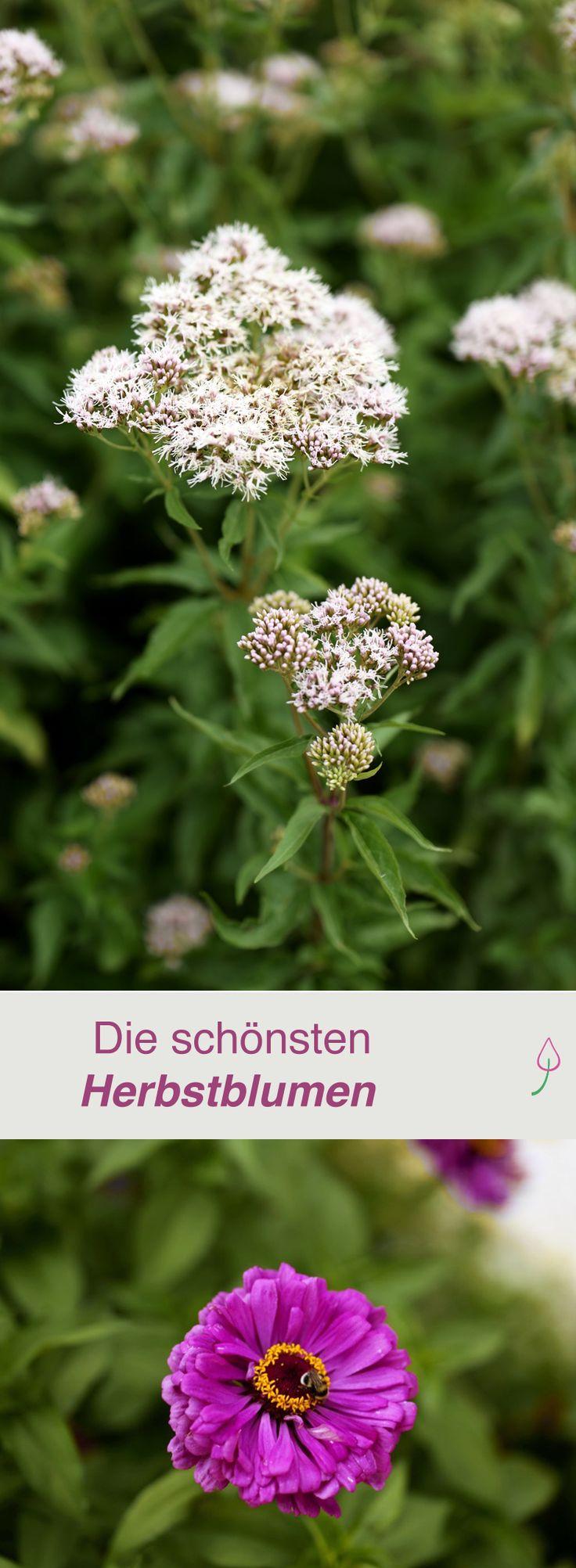 schones schone herbstblumen erfreuen unser auge im september frisch images der ccebfbabed