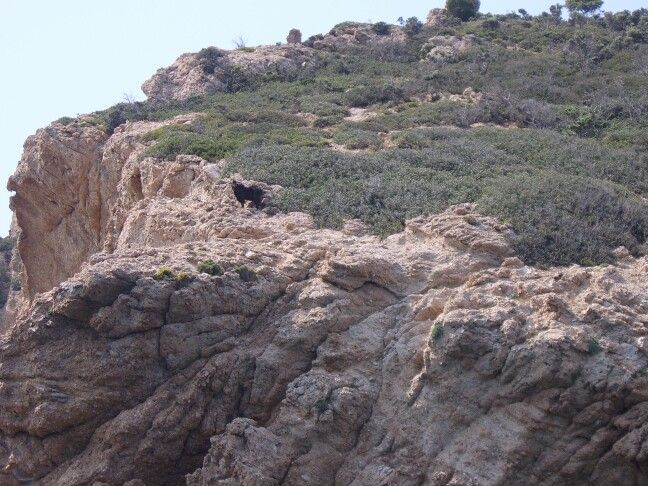 lonely goat,up on Kefala