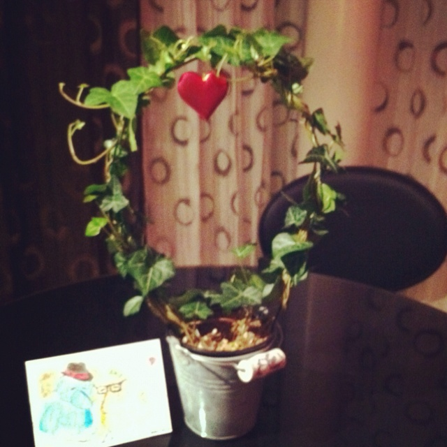 Valentines plant from my love. Hope I manage to keep it alive..