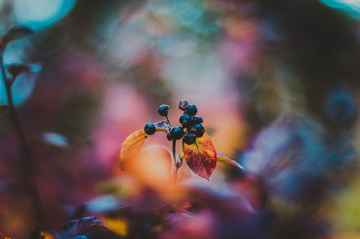 Fructe de padure cu Kristina Manchenko pe 500px