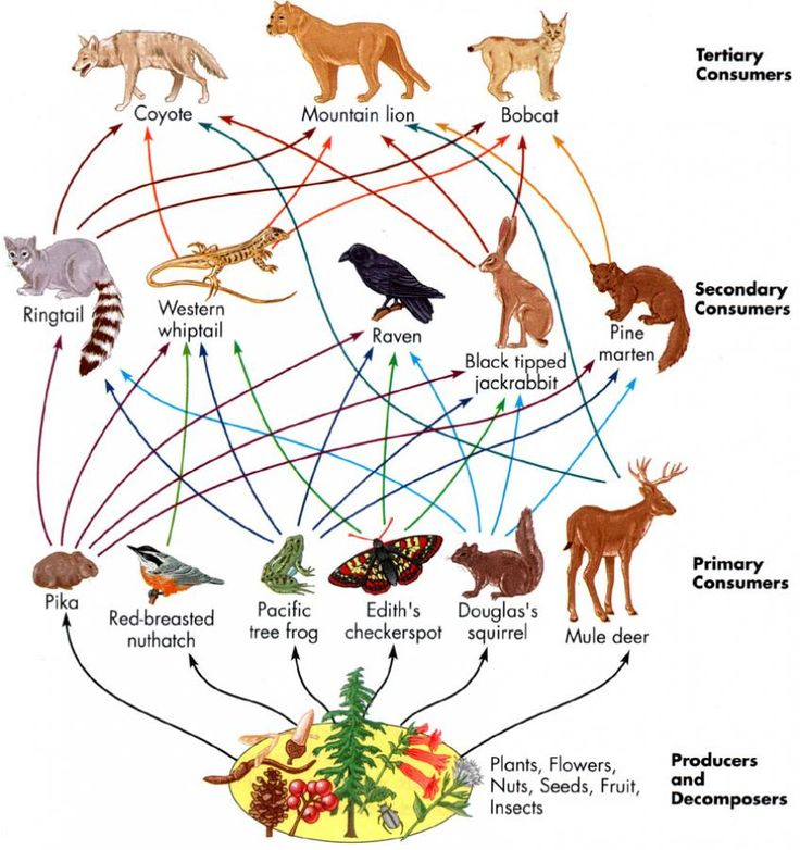 This is a food web. The food web shows the energy flow through different organisms in an ecosystem. This can be used to teach about food webs.