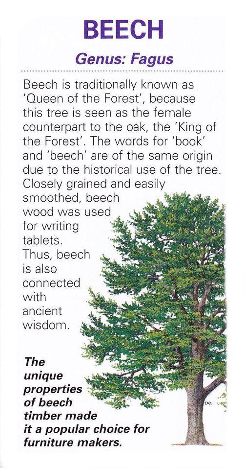 Sacred celtic tree Beech / Book of Shadows
