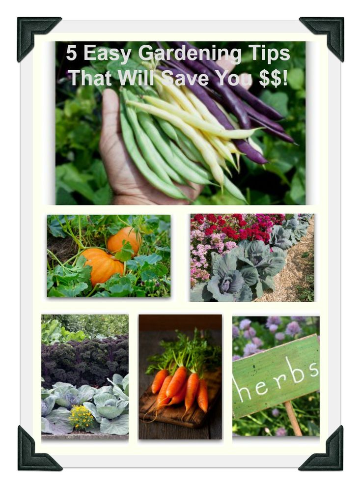 vegetable planting guide zone 6