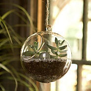 hanging terrariumGlasses Gardens, Kitchens Windows, Green Thumb, Hanging Plants, Glasses Hanging, Urban Gardens, Orb Terrariums, Hanging Orb, Hanging Terrariums