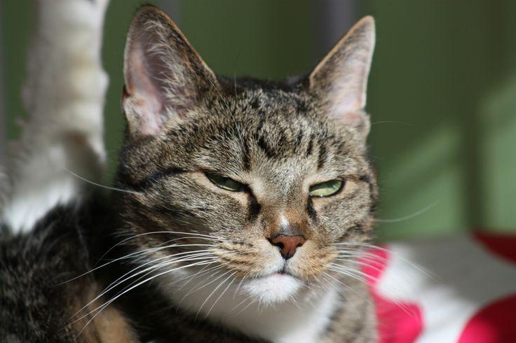 Arvi-cat