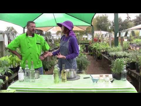 How to make Herb Infused Vinegar, Salts, and Oils - YouTube