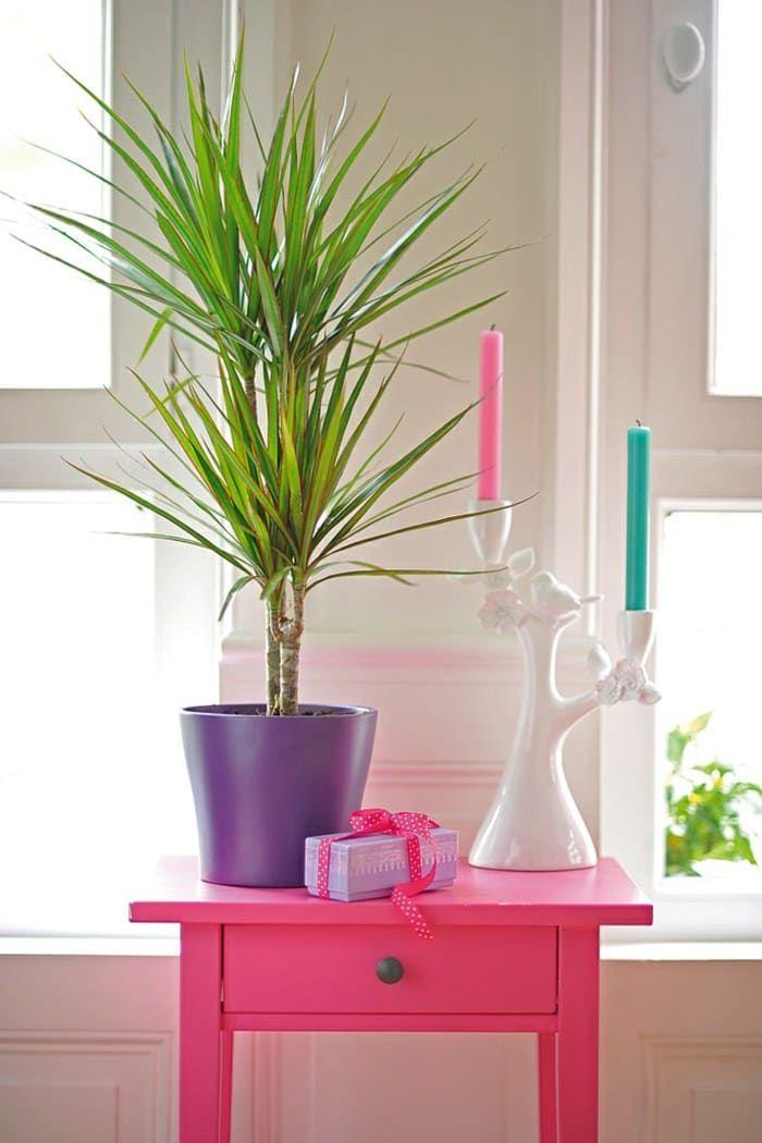 99 Great Ideas To Display Houseplants Indoor Plants Decor Diy Home Decor Bedroom Decor Living Room Decor In 2020 Houseplants Indoor Feng Shui Plants Indoor Plants #plants #in #living #room #feng #shui